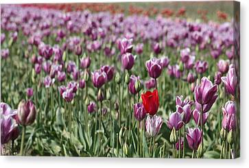 Standing Out In A Crowd Canvas Print by Nick Gustafson