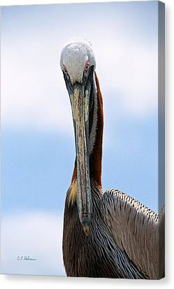Stare Down Canvas Print by Christopher Holmes