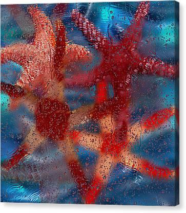Starfish Canvas Print by Jack Zulli