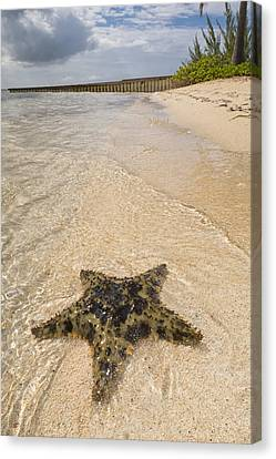 Starfish On The Beach At Starfish Point Canvas Print by Adam Romanowicz