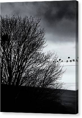 Starlings Roost Canvas Print by Philip Openshaw