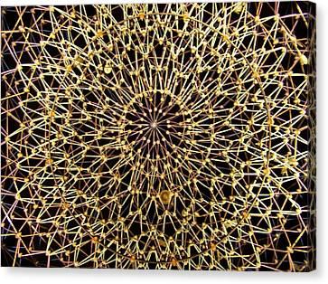 Starry Night Canvas Print by Jake Hartz