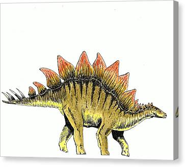Stegosaurus Canvas Print by Michael Vigliotti