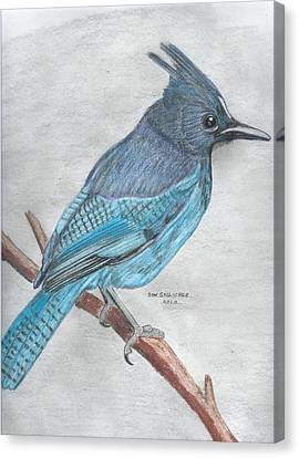 Stellar's Jay Canvas Print by Don  Gallacher