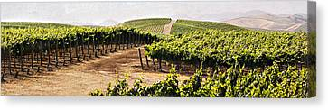 Step Into My Vineyard Canvas Print by Marilyn Hunt