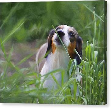 Stewie In The Grass Canvas Print by Theresa Campbell