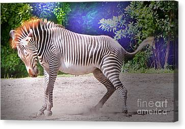 Stomp Canvas Print by Judy Kay