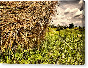 ..straw... Canvas Print by Russell Styles