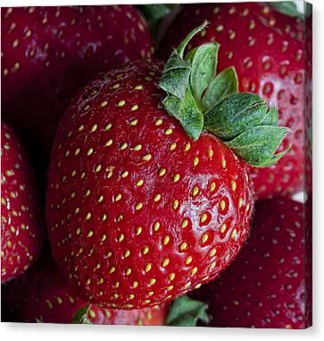 Strawberry 3 Canvas Print by Robert Ullmann