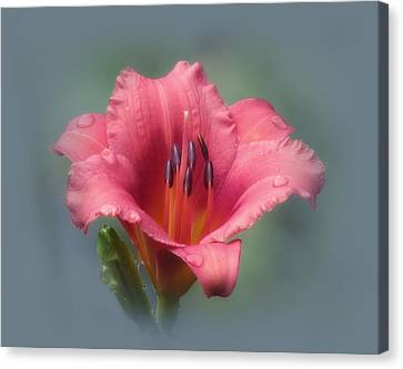 Strawberry And Blue - Daylily Canvas Print by MTBobbins Photography