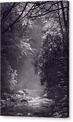 Stream Light B W Canvas Print by Steve Gadomski