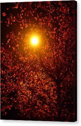 Streetlamp Through Tree Canvas Print by Utopia Concepts