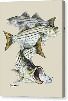 Striped Bass Canvas Print by Kevin Brant