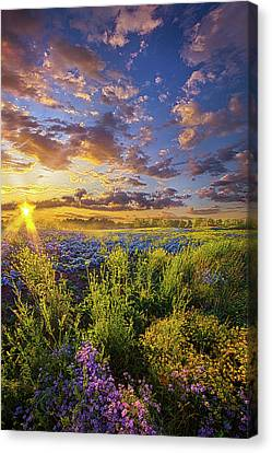 Striving To Be Canvas Print by Phil Koch
