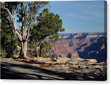 Stroll Along The Canyon Canvas Print by Cyril Furlan