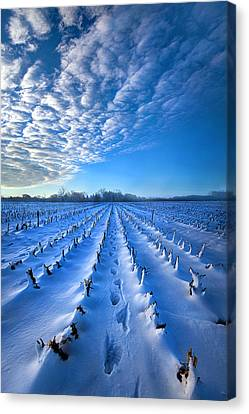 Strolling Between The Rows Canvas Print by Phil Koch
