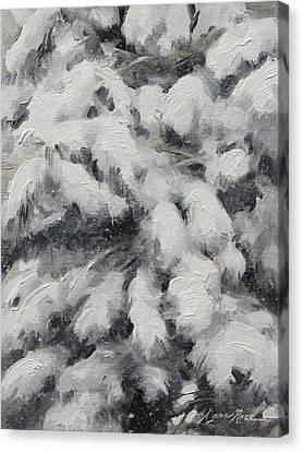 Study In Torrit Grey Canvas Print by Anna Rose Bain