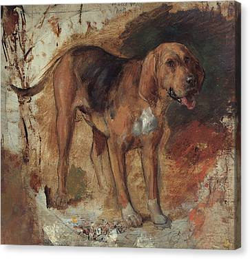 Study Of A Bloodhound Canvas Print by William Holman Hunt