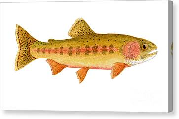 Study Of A Golden Trout Canvas Print by Thom Glace