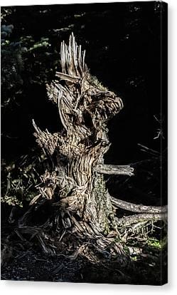 Stump In The Woods Canvas Print by John Haldane
