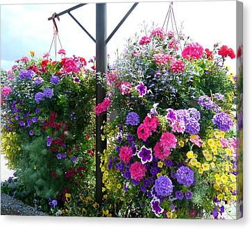 Stunning Floral Baskets Canvas Print by Will Borden