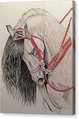 Stunning Spanish Horse Canvas Print by Brenda Brown