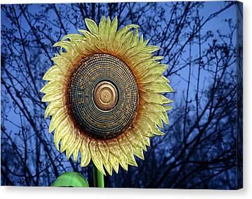 Stylized Sunflower Canvas Print by Tom Mc Nemar