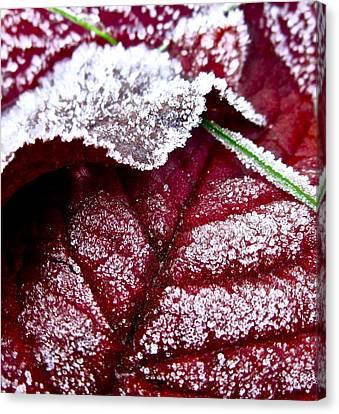 Sugar Coated Morning Canvas Print by Gwyn Newcombe