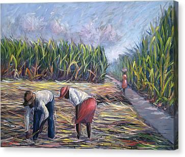 Sugarcane Harvest Canvas Print by Carlton Murrell