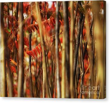 Sumac Abstract Canvas Print by Jimmy Ostgard