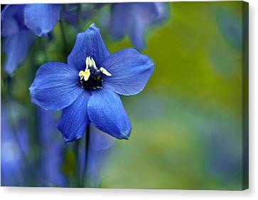 Summer Blues Canvas Print by Jessica Jenney