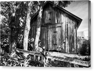 Summer Country Barn Bw Canvas Print by Mel Steinhauer