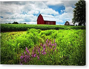 Summer Flowers In The Fields Canvas Print by Debra and Dave Vanderlaan