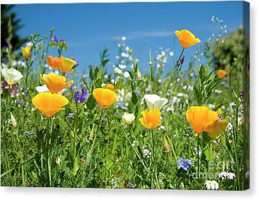 Summer Flowers Canvas Print by Sophie De Roumanie