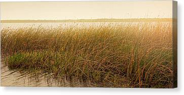 Summer On The Marsh Canvas Print by Sally Simon