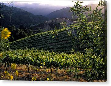 Summer Vineyard Canvas Print by Kathy Yates