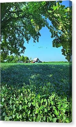 Summertime Blues Canvas Print by Phil Koch