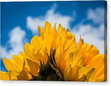 Summertime Happiness Canvas Print by Shelby Young