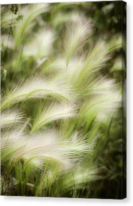 Summertime Canvas Print by Marilyn Hunt
