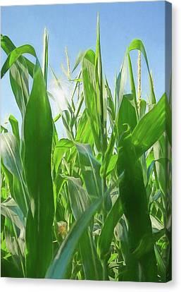 Sun Flare Through Corn Stalks Canvas Print by Dan Sproul