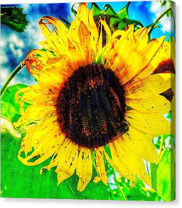 Sun Canvas Print by Jame Hayes