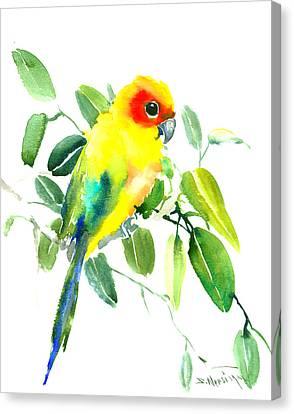 Sun Parakeet Canvas Print by Suren Nersisyan