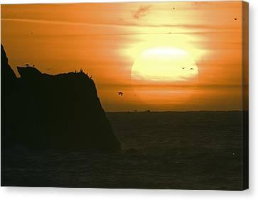 Sun Setting With Flying Birds Canvas Print by Rich Reid