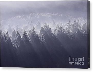 Sunbeams Canvas Print by Yuri Santin