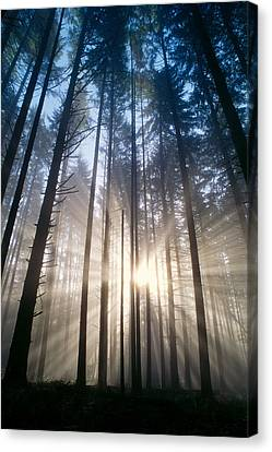 Sunburst In The Forest Canvas Print by Greg Vaughn - Printscapes