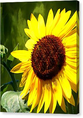 Sunflower 4 Canvas Print by Marty Koch