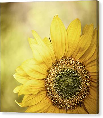 Sunflower Blossom With Bokeh Background Canvas Print by Elisabeth Schmitt
