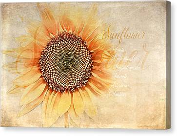 Sunflower Classification Canvas Print by Terry Davis