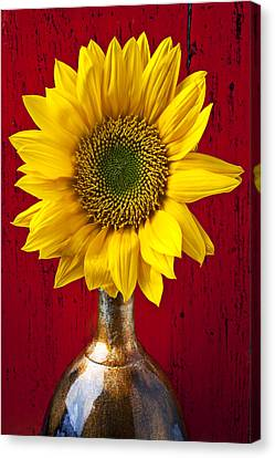 Sunflower Close Up Canvas Print by Garry Gay