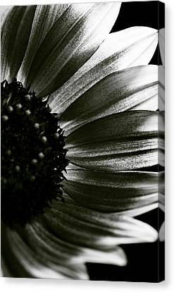 Sunflower Canvas Print by Fine Arts
